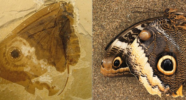 Scientists stunned to find butterfly hanging around dinosaurs