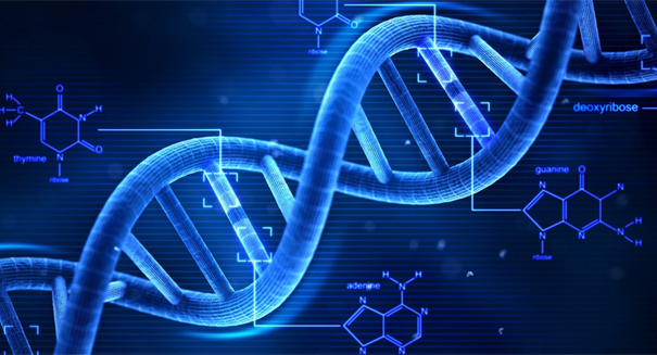 DNA Reveals Common Ancestor for Humans and Sea Worms