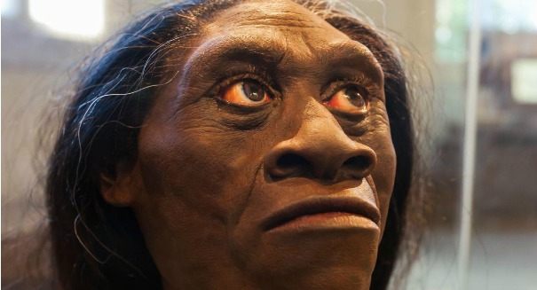 Study: Humans may have destroyed Hobbits in Indonesia
