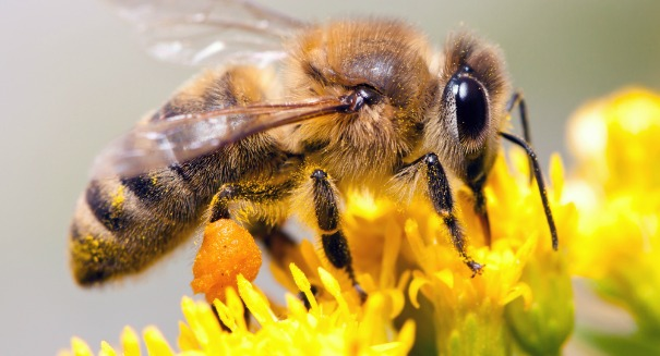 Stunning claim: Bees are going extinct