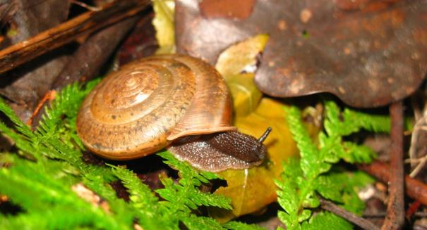 Smallest land snail ever discovered in China