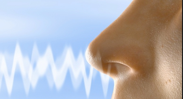 The incredible truth about the human nose